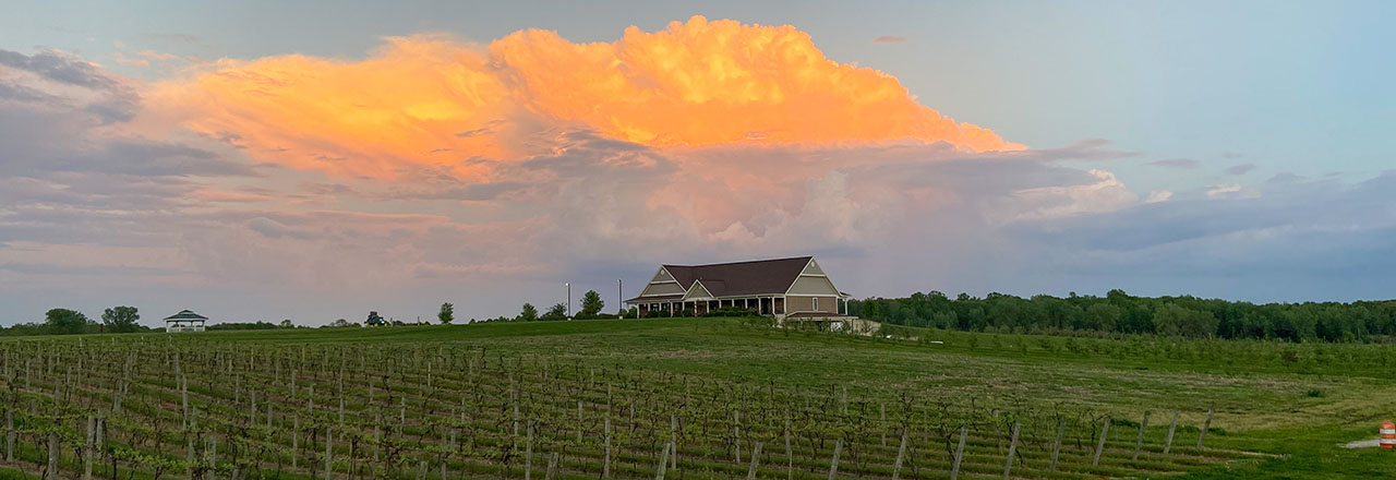 12 Corners Vineyards Grows A Variety Of Grapes