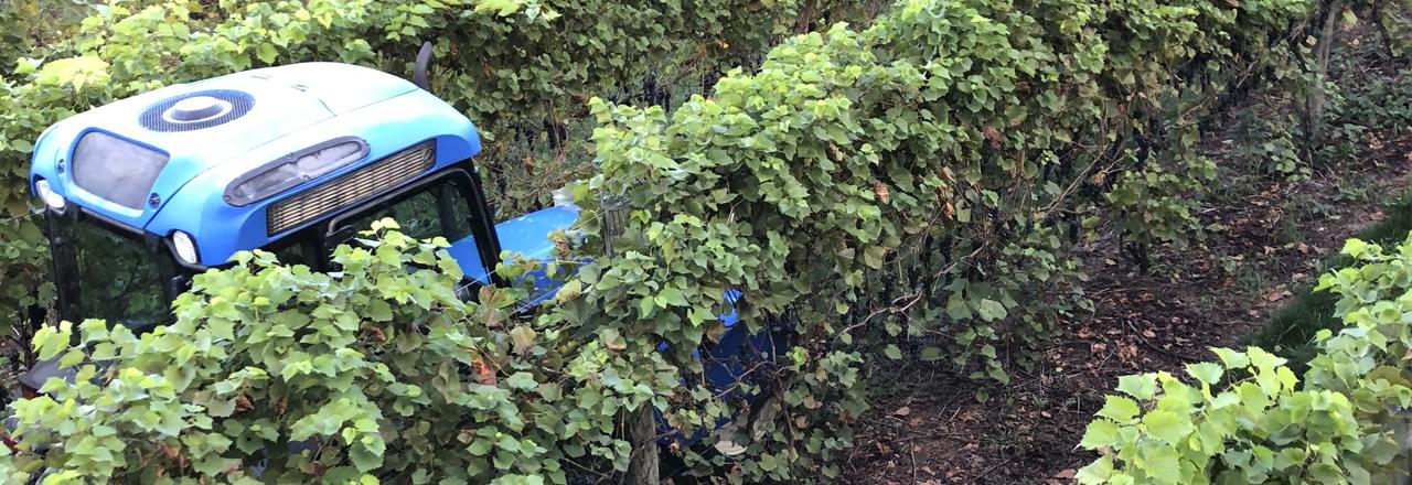 12 Corners Vineyards Grape Variety